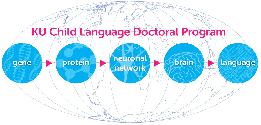 gene, protein, neuronal network, brain, language